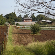 Looking towards the Egg House