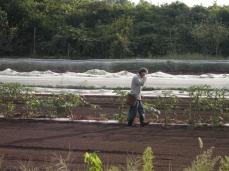 Shimamura inspecting crop