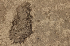 Soil on the farm with faded footprint
