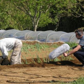 Shimamura planting negi